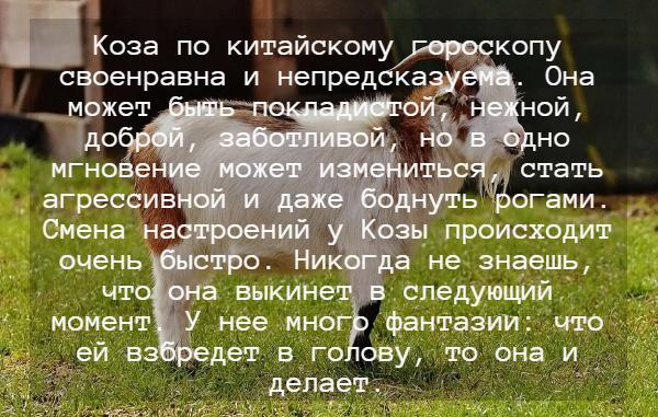 Гороскоп на 2022 год для Козы (Овца)